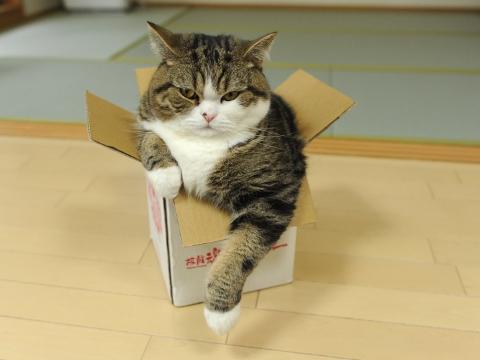 Вылезь из коробки и живи